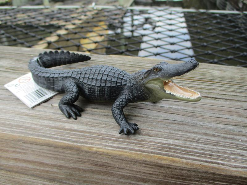 WS Alligator,276429