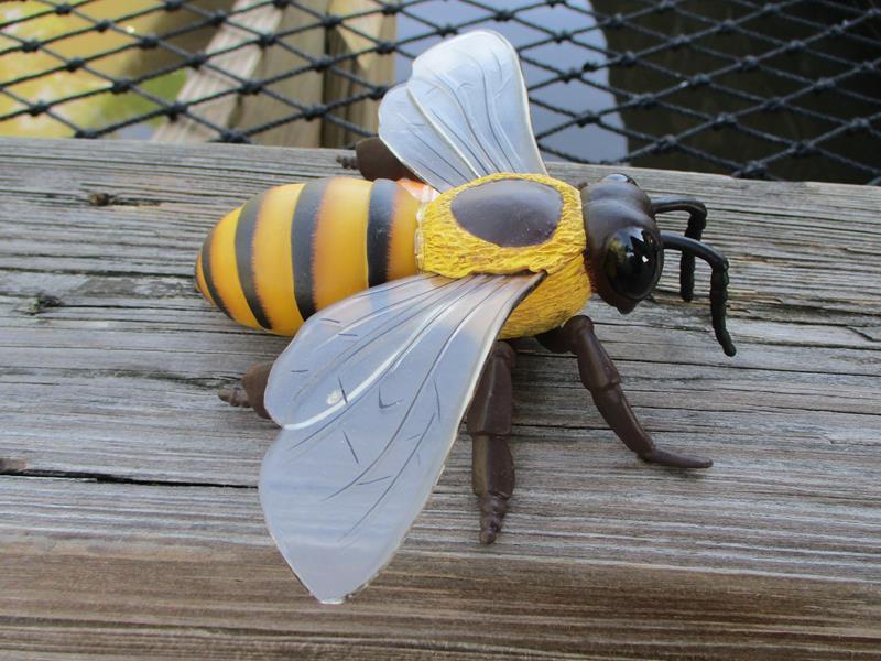Honey Bee,26829