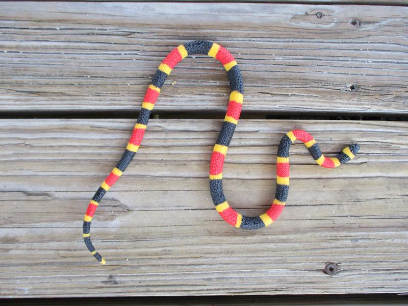 Coral Snake Baby,263329