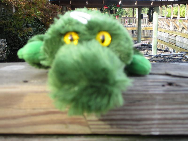 "8"" Mini Gotcha Alligator,16619*"
