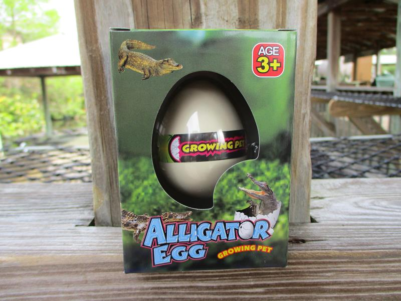 Hatch Egg Alligator,T-279A