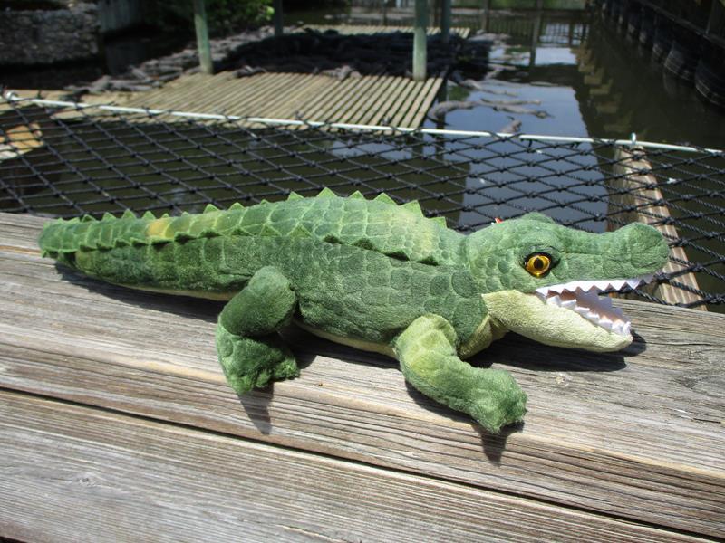 CK Mini Alligator,19539