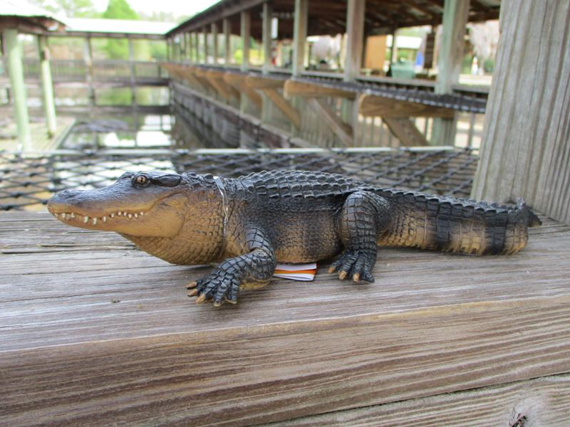 NEW Alligator,113389