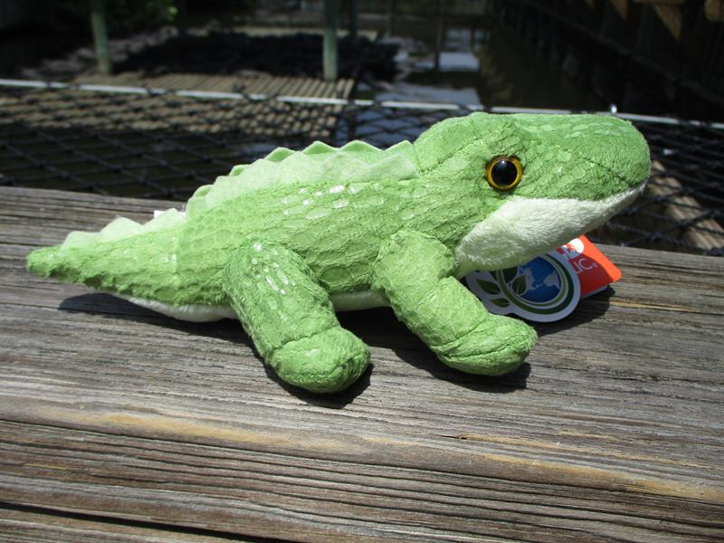 CK Lil's Alligator,18103###