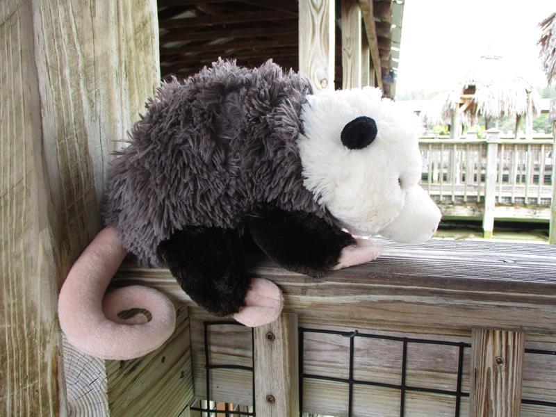 CK Opossum12,13462*
