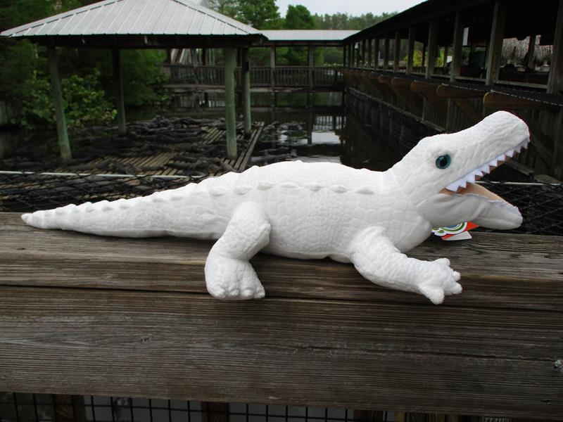CK White Alligator,122559