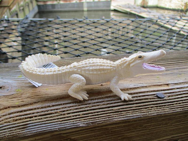 White Alligator,291929